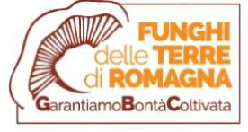 L-funghi terre romagna-banner